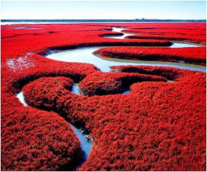 plage rouge chine