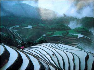 rizière chine